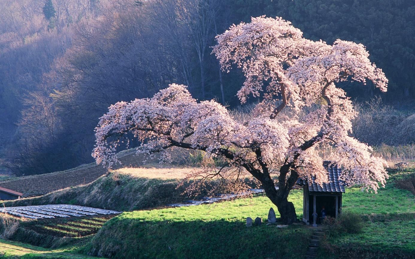 Japon14.jpg